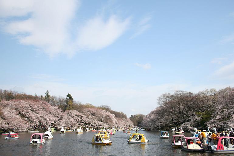 「【武蔵野市】基本情報・シェアハウスの賃料相場を公開!」のアイキャッチ画像