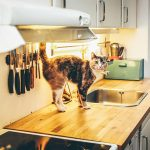 ペットと住めるシェアハウス!愛犬・愛猫と一緒の暮らしが叶う5物件