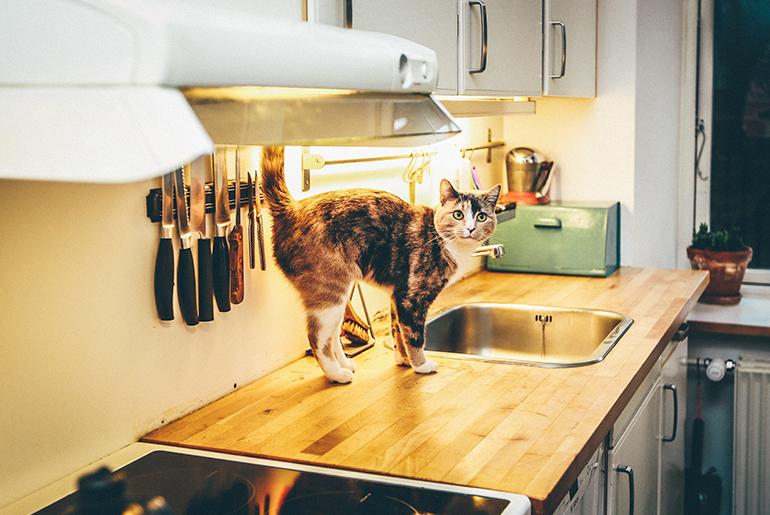 「ペットと住めるシェアハウス!愛犬・愛猫と一緒の暮らしが叶う5物件」のアイキャッチ画像